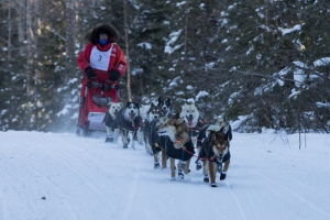 CANADIAN CHALLENGE INTERNATIONAL SLED DOG RACE 2018